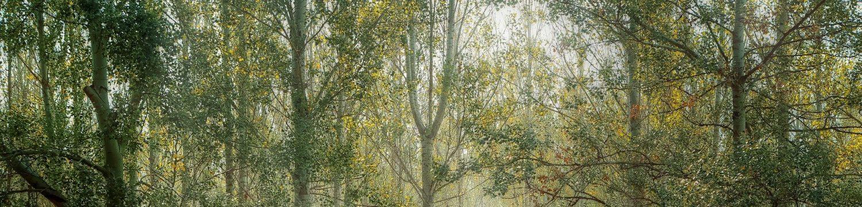 Devon Antique Pine